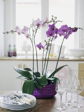 Резултат со слика за слики за цвеќе во вашите домови